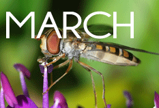 March, the month that was